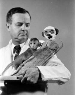 Harlow S Contact Comfort by Harlow S Monkey Experiments Mr Mcnabb