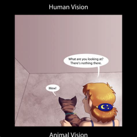 Cat Stares At Ceiling by Looking At Nothing Humon Comics