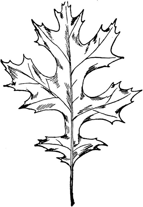Simple Listy Black And White picture of leaf cliparts co