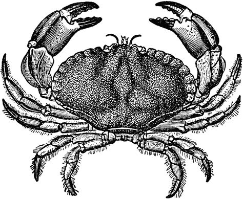 free crab clipart pictures clipartix