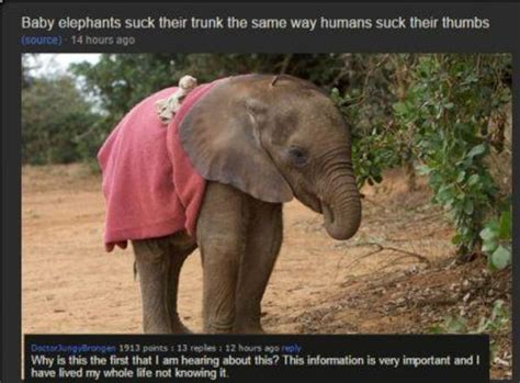Baby Elephant Meme - baby elephants suck their trunk elephants know your meme