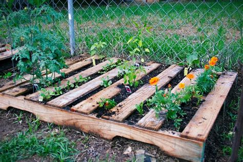 Vegetable Garden In Pallet Veggie Pallet Garden