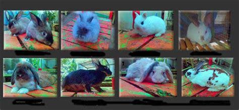 Harga Pakan Kelinci Pedaging kelinci kelinci