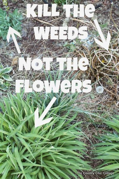 weed killer for flower beds kill weeds not flowers