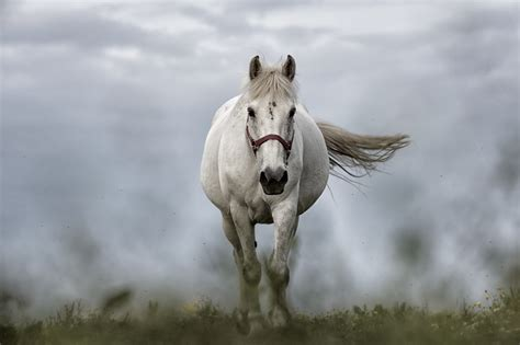 white mustang horse free images nature animal pasture stallion mane