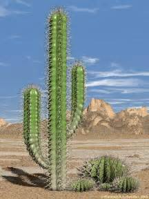 science tablets how can desert plants live without water