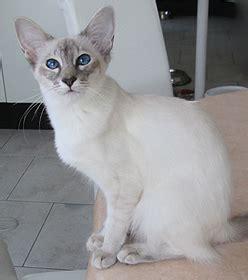Poil A Bois 422 by Ccg Cat Club De 232 Ve
