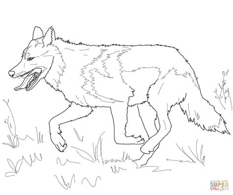 running mexican grey wolf coloring page free printable