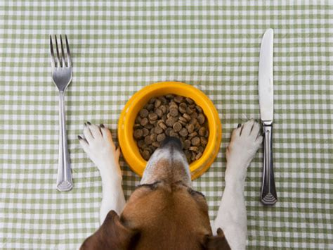 how to dogs not to eat everything not it may be due to sensitive stomach petmd