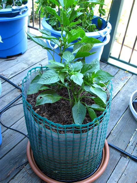Organic Container Vegetable Gardening Low Cost Vegetable Garden Zero Cost Organic Container