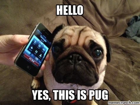 Pug Memes - funny pug memes