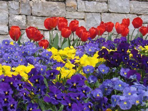 foto di fiori primaverili fiori primavera fiorista fiori primaverili