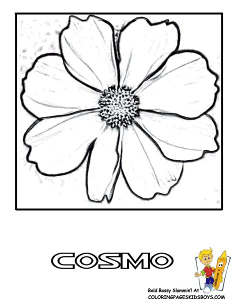 Cosmos Flower Coloring Page | cosmos flower coloring pages