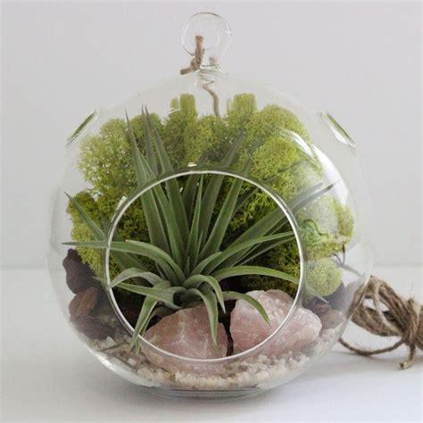 indoor moss garden kit 17 best images about glass dome on deko bottle and orchid terrarium
