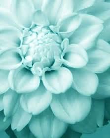 25 best ideas about blue flowers on pinterest light