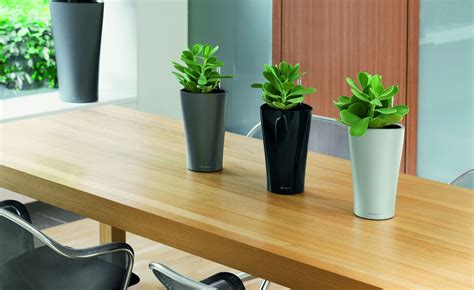 plant for office commercial plant installation beneva plantscapes