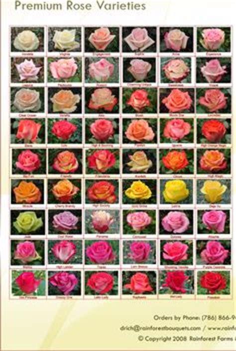 1000 ideas about orange roses on pinterest