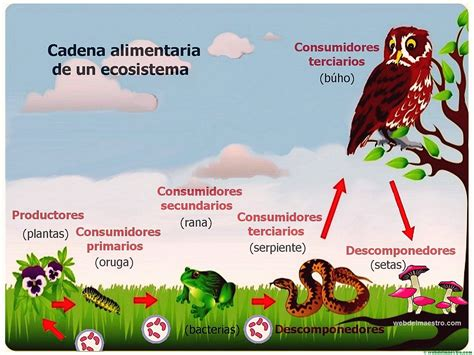cadena alimenticia acuatica descomponedores ecosistema cadena alimenticia web del maestro