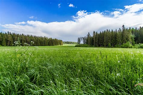 field grass forest trees sky landscape r wallpaper 4345x2897 195263 wallpaperup