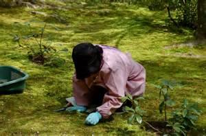 kokedera le jardin de mousse de kyoto voyagista
