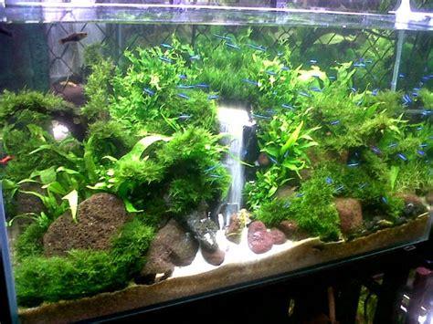 membuat air terjun aquascape dunia akuarium