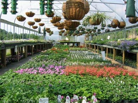 coltivare fiori in serra serra per piante serre