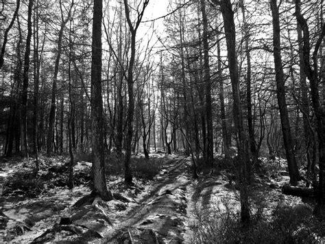 black and white woodland wallpaper free photo black and white woodland forest free image