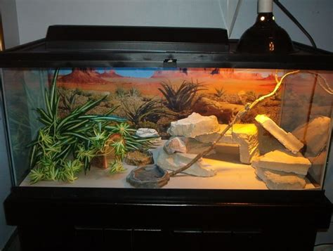 Bearded Dragon Decor Ideas Bearded Dragon Habitat Bearded Dragon Habitat Decor I14