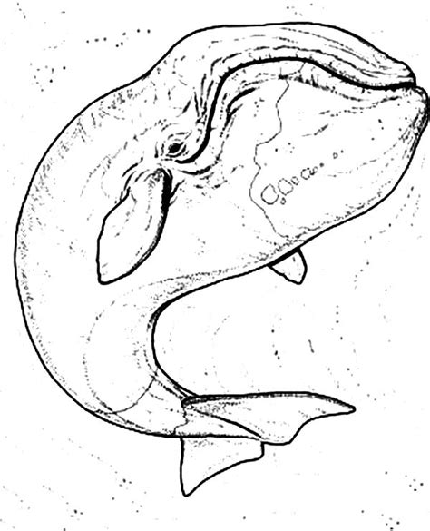 bowhead whale coloring page free coloring pages of bowhead whale