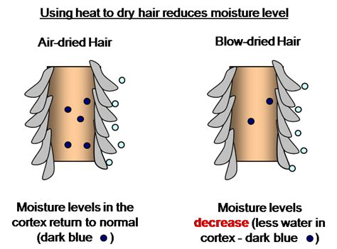 Dryer Effects On Hair the drying reduces moisture in hair