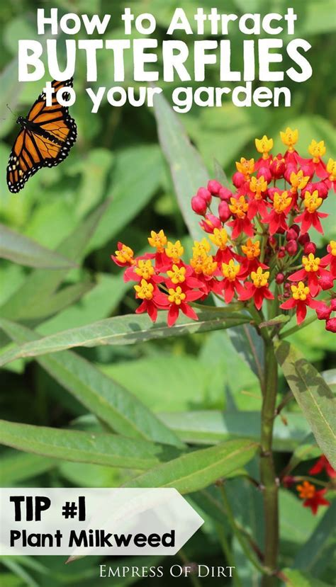 How To Attract Butterflies To Your Backyard by 17 Best Images About Butterfly S On Gardens