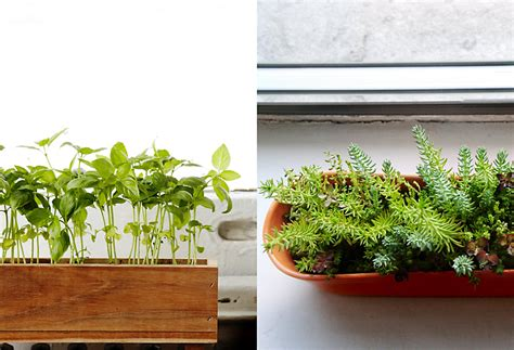 Indoor Window Sill Planter Box by Window Sill Planter The Homestead Survival Repurposed