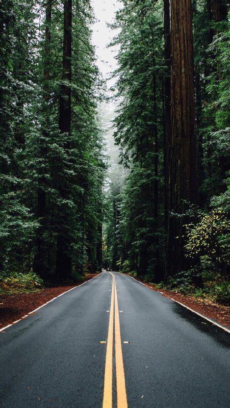 caminos y senderos #1: Green-Big-Trees-Road-USA-iPhone-Wallpaper-iphoneswallpapers_com-469x832.jpg