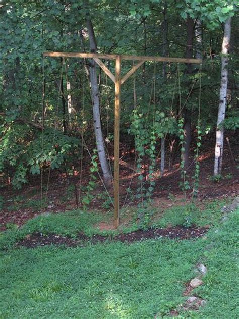 backyard hop trellis hops pinterest