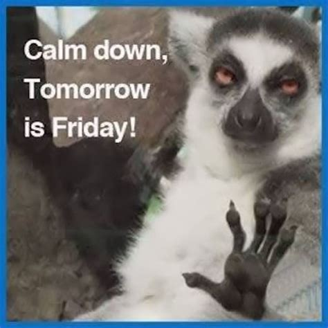 Tomorrow Is Friday Meme - tomorrow is friday memes