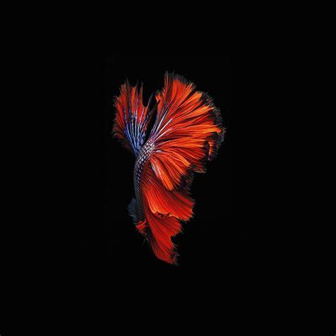 apple ios fish  background dark red ipad air