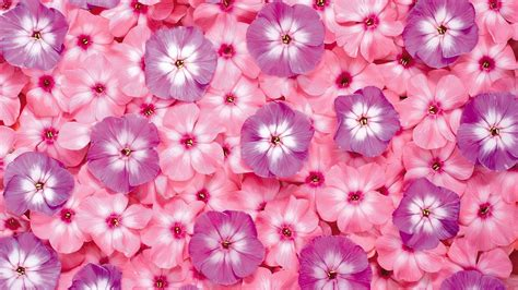 pink flower wallpaper 35 high definition pink wallpapers backgrounds for free