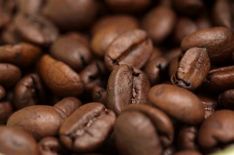 file coffee beans jpg wikipedia