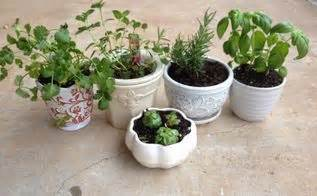 Windowsill Herb Garden Containers Kokedama From Plant Cuttings Hometalk