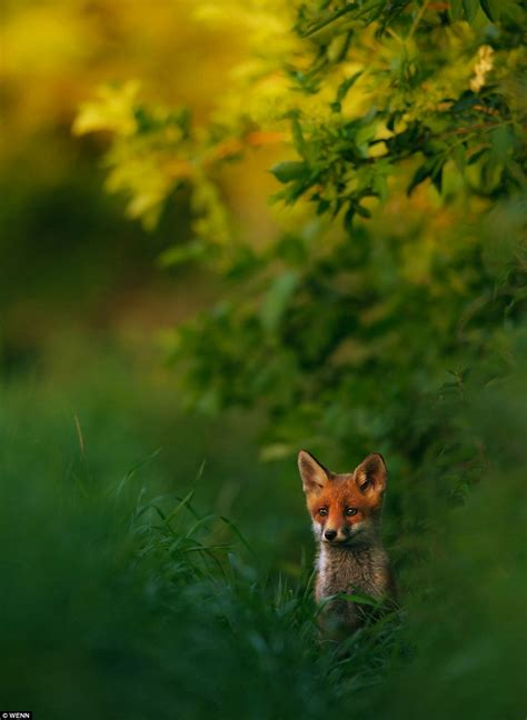 natures best uk nature photographer of the year 2013 competition the best