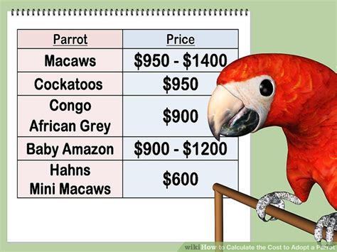 how to calculate the cost to adopt a parrot 7 steps