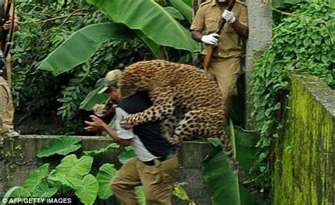 Gir Gendong Tiger macan tutul ini mengamuk ingin di gendong petugas