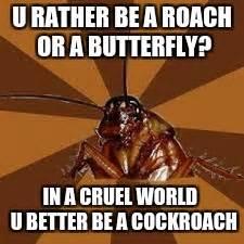 Roach Meme - cockroach imgflip