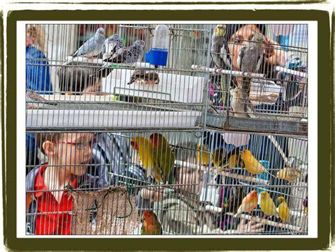 uccellini in gabbia figline