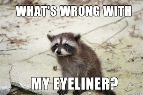 Raccoon Memes - 10 tips on what not to wear in goa triphobo