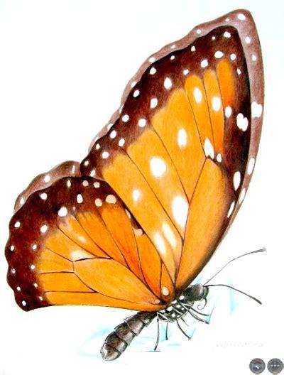 imagenes de mariposas realistas portal guaran 237 mariposa dibujo de andrea piccardo