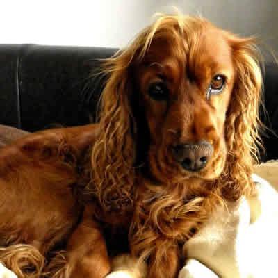 anaplasmosis in dogs anaplasmosis in dogs borreliose nachrichten