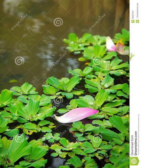 one leaf lotus theleaf co