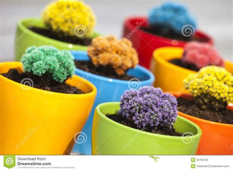 Colorful Tropical Plants - small colored cacti stock photos image 32793733