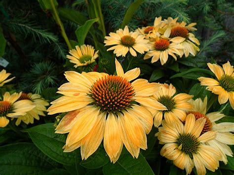august plant showcase south pleasantburg nursery